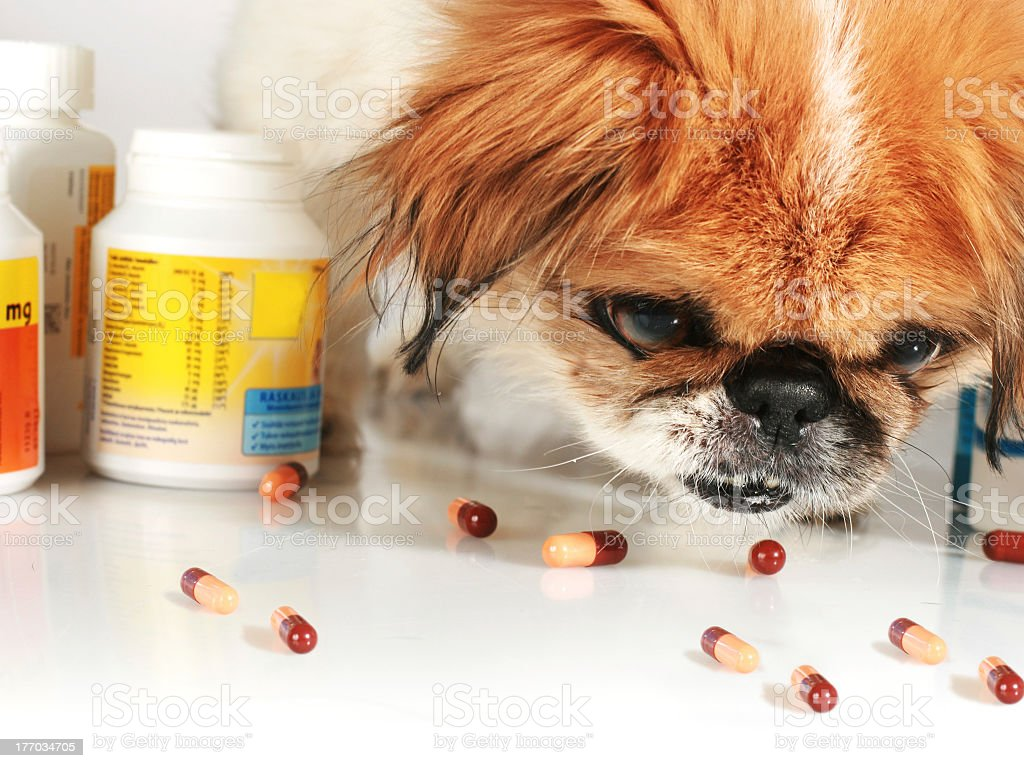Veterinary table with pills, tablet bottles and dog's face royalty-free stock photo