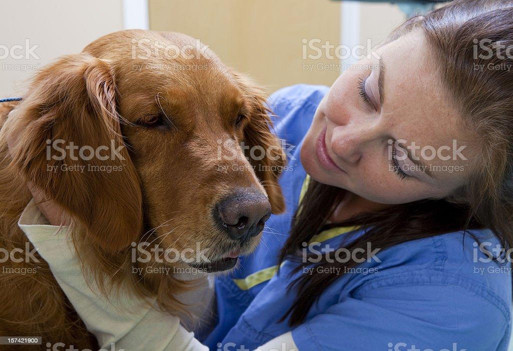 Veterinary Technician Hugs a Golden Retriever royalty-free stock photo