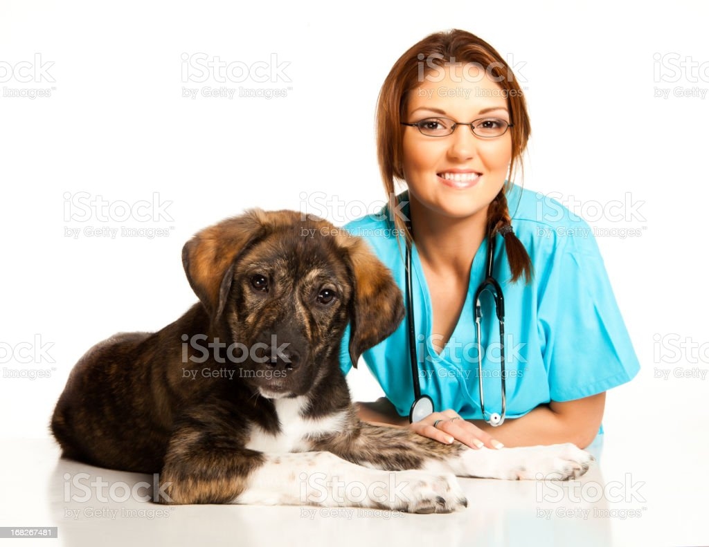 Veterinary technician with brown and white puppy dog royalty-free stock photo