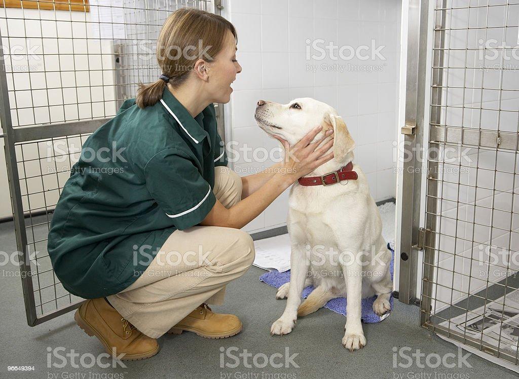 Vetinary Nurse Checking Sick Animals stock photo