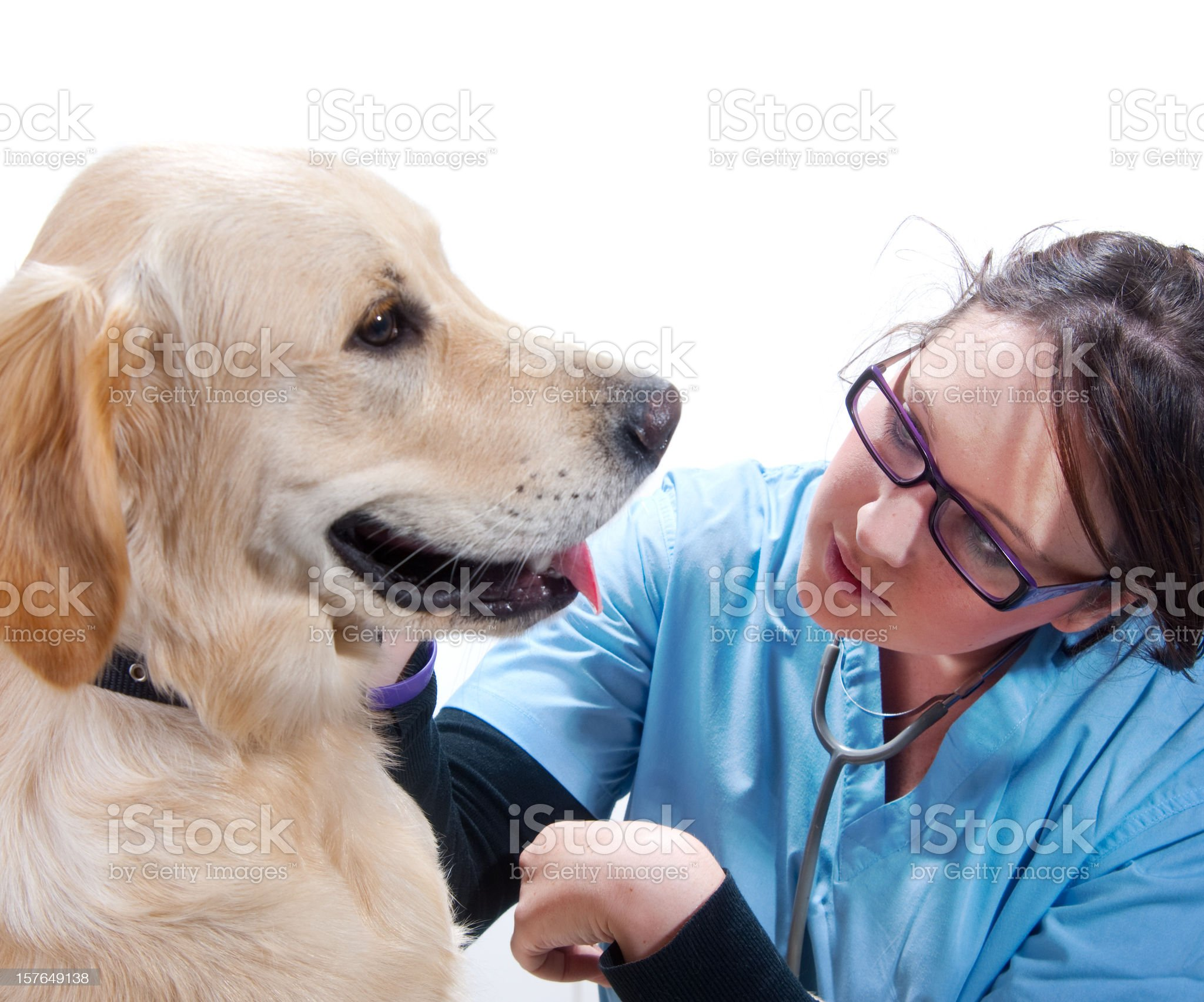 vets checks on puppies progress royalty-free stock photo
