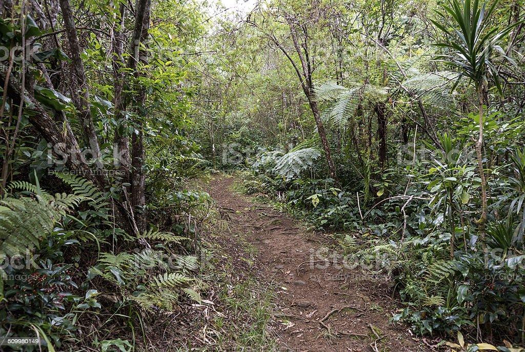 V?g?tation tropicale, Sentier, Reunion Island stock photo