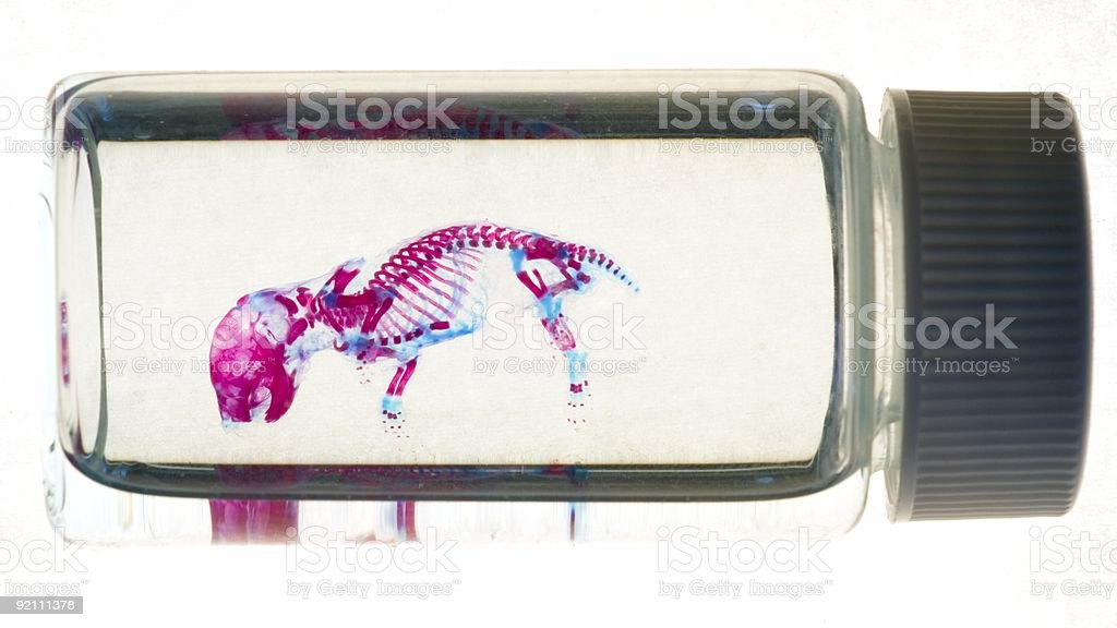 vial containing a stained mouse skeleton stock photo