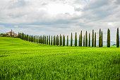 Viale alberato in Val D'Orcia, Toscana, Italia