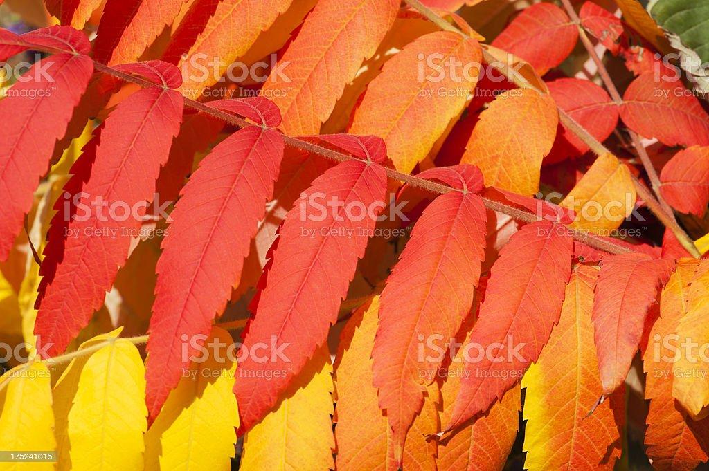 Vibrane of Autumn royalty-free stock photo