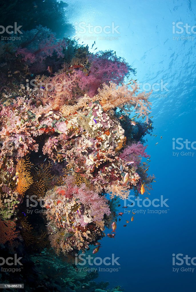 Vibrant and colourful underwater tropical coral reef scene royalty-free stock photo