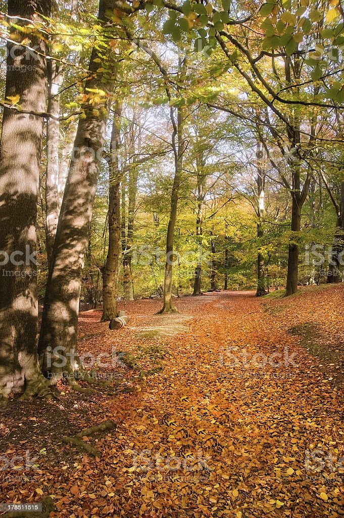 Vibrant Autumn Fall forest landscape image royalty-free stock photo