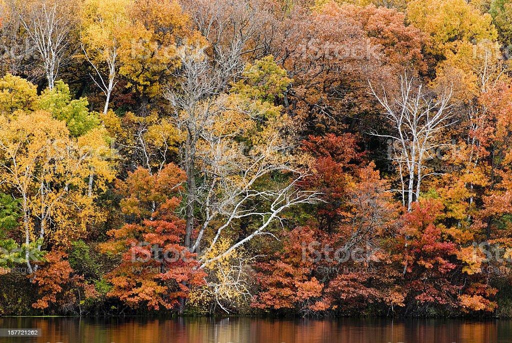 Vibrant Autumn royalty-free stock photo