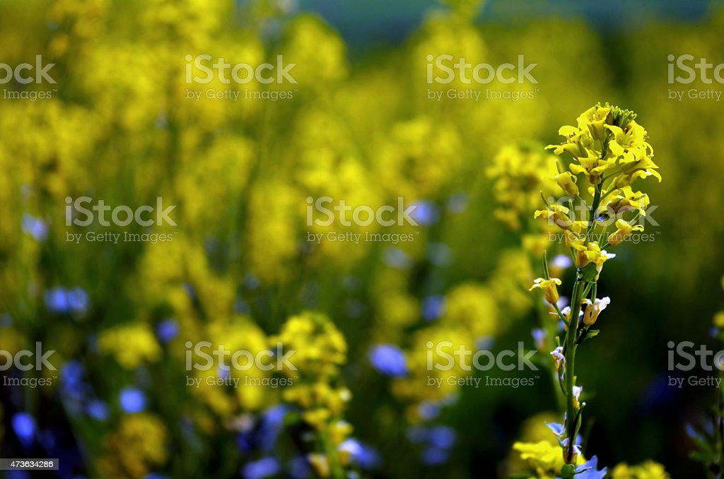 Vibrant blossoms stock photo