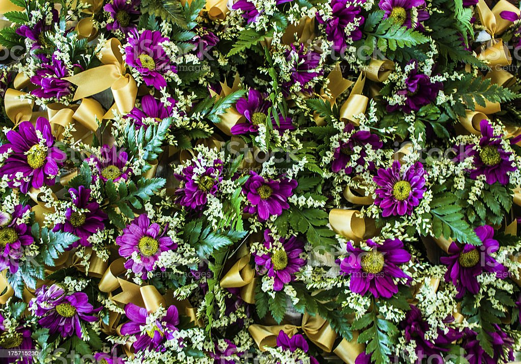 Vibrant bright purple daisy flowers royalty-free stock photo