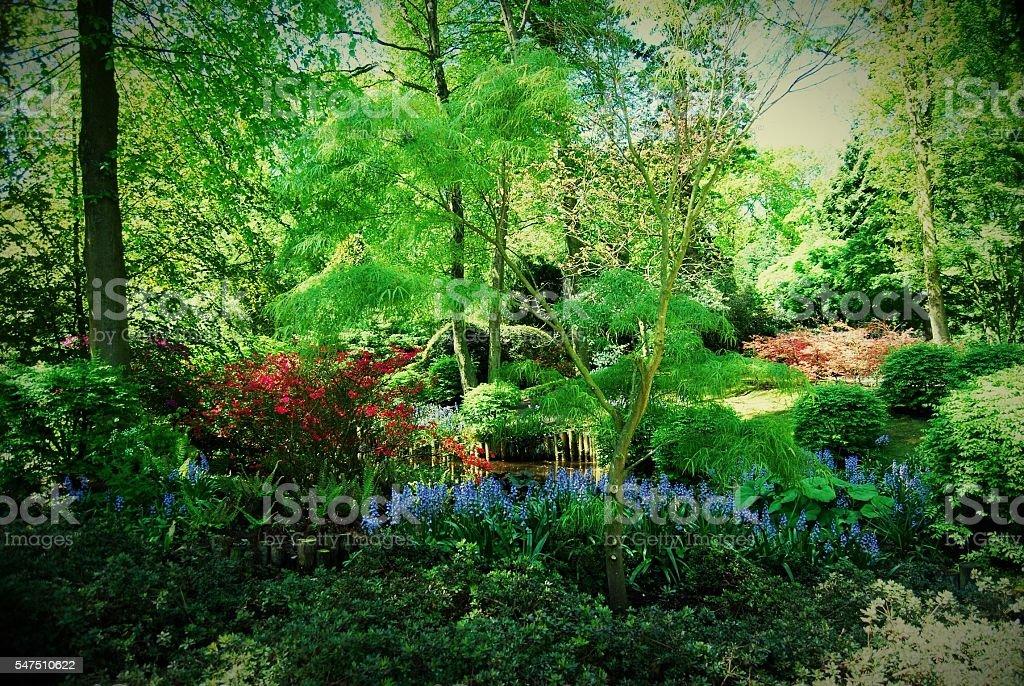 Vibrant colors of the garden in Spring stock photo