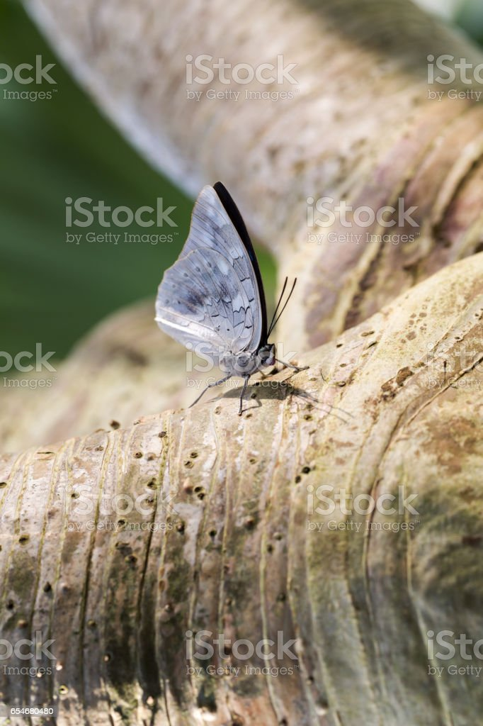 Vibrant colour butterfly extreme macro stock photo