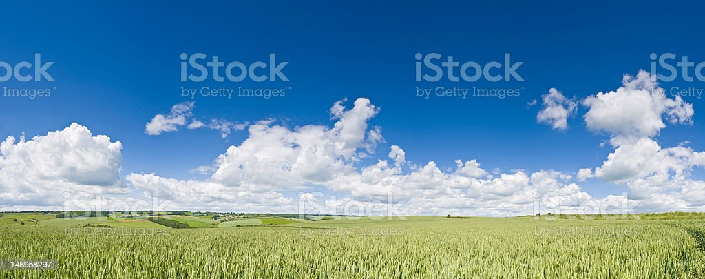 Vibrant crop fields big sky background royalty-free stock photo