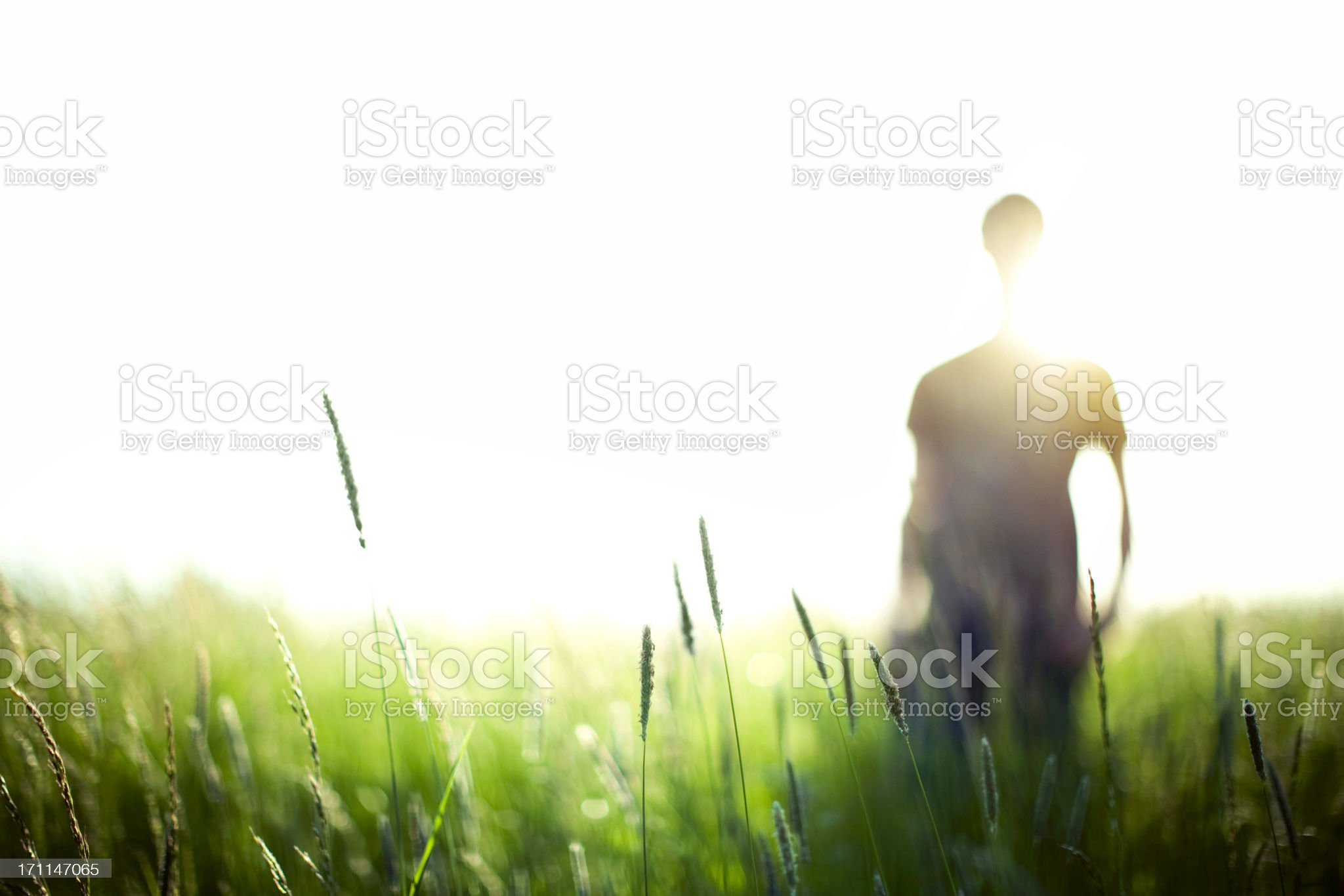 Vibrant Field and Silhouette royalty-free stock photo