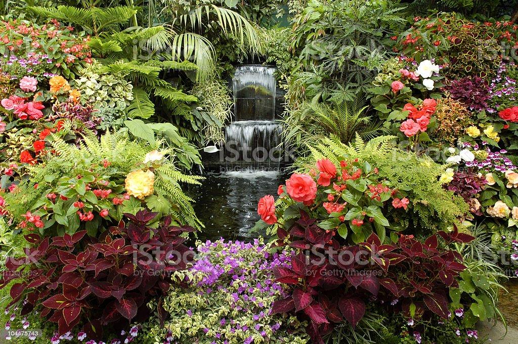 A vibrant floral outdoor garden stock photo