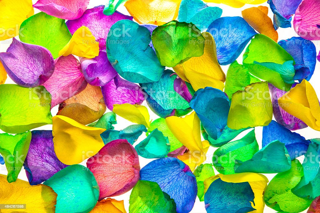 Vibrant Flower Petals Of Rainbow Dyed Roses royalty-free stock photo