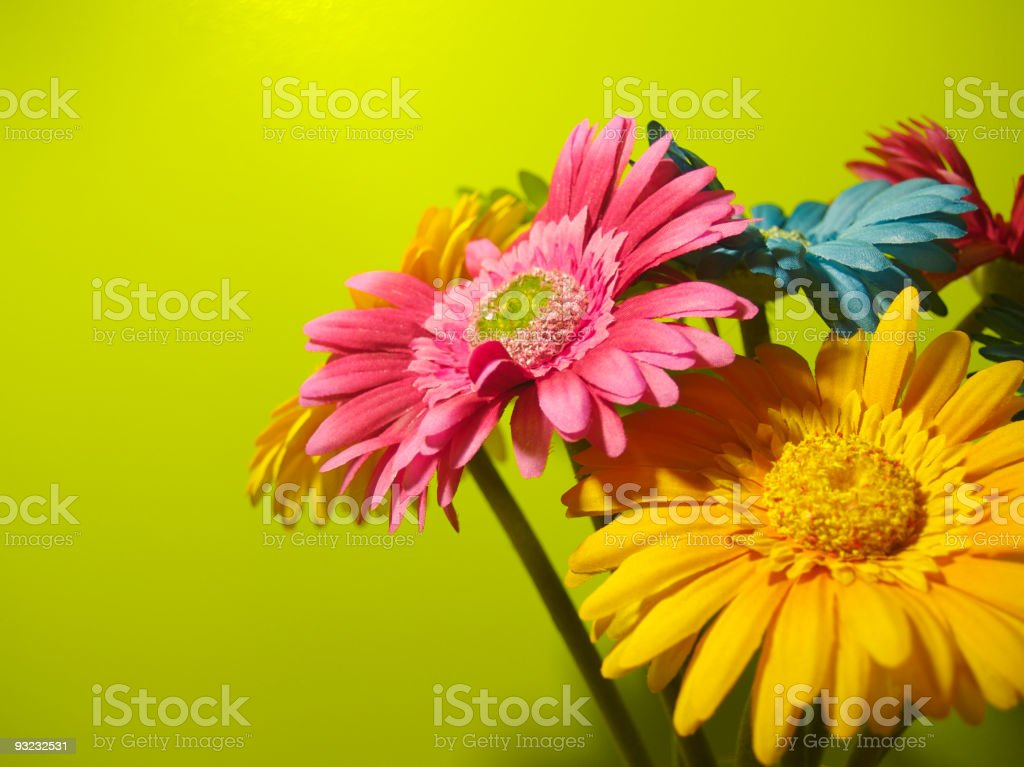 Vibrant Flowers royalty-free stock photo