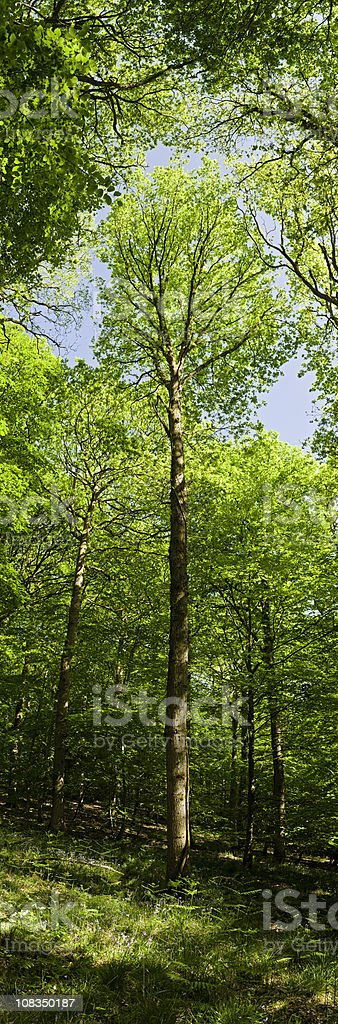 Vibrant forest vertical green tree foliage summer wilderness woods banner royalty-free stock photo