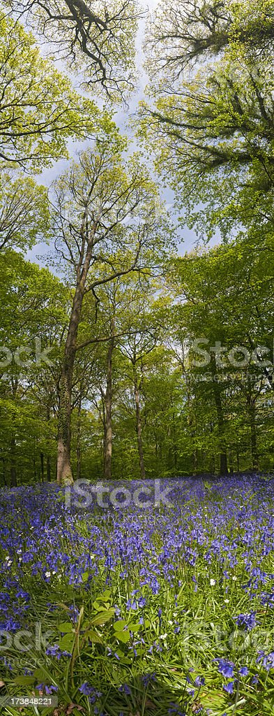 Vibrant forest wild flower vertical banner royalty-free stock photo