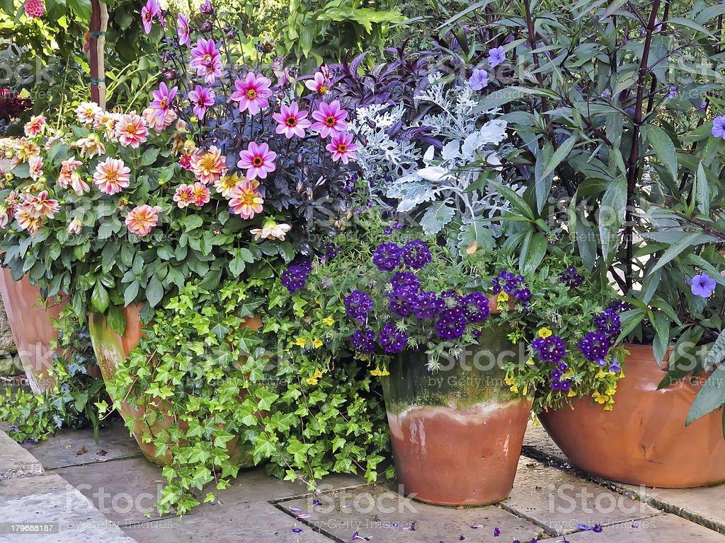 Vibrant garden display stock photo