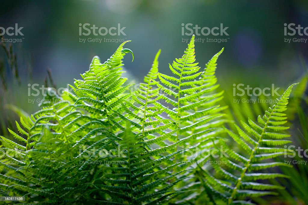 Vibrant green fern against blurred background  stock photo