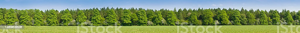Vibrant green forest field background royalty-free stock photo