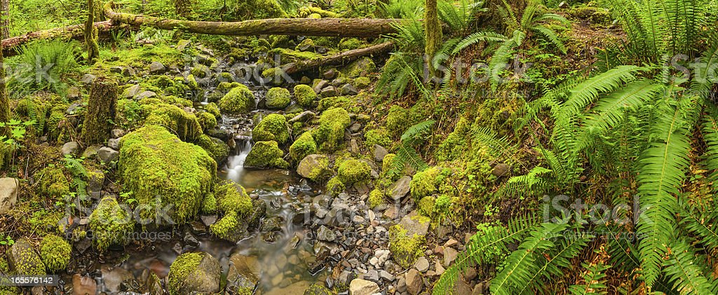Vibrant green forest mossy stream ferns stock photo