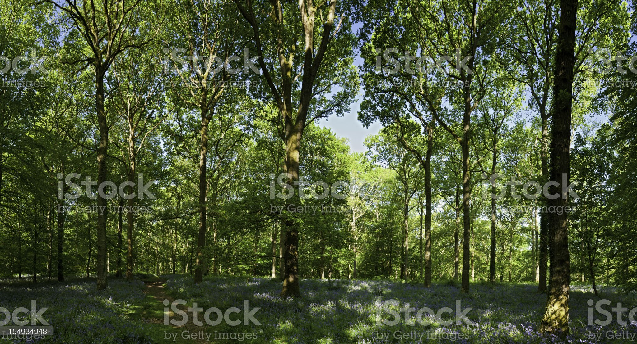 Vibrant green spring forest idyllic wilderness woodland trail panorama royalty-free stock photo