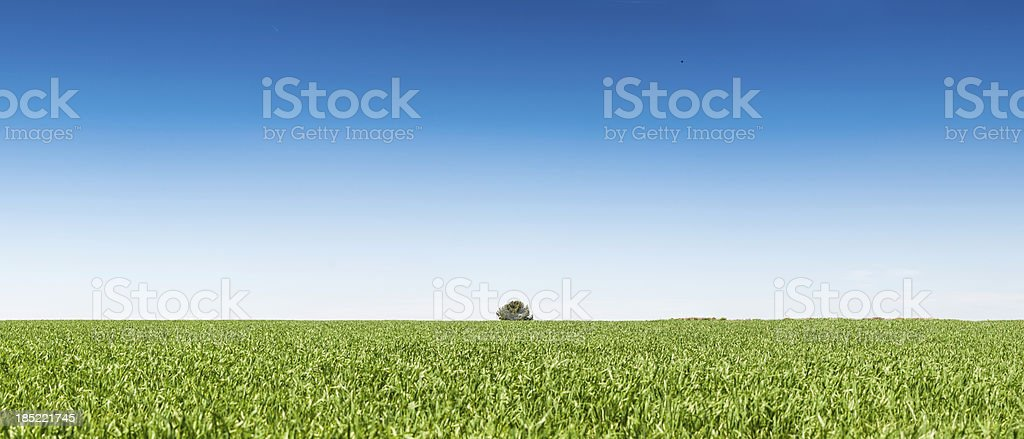 Vibrant green summer field background panorama royalty-free stock photo