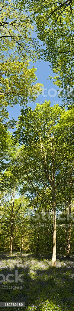 Vibrant green summer forest vertical panorama banner idyllic wild woodland royalty-free stock photo