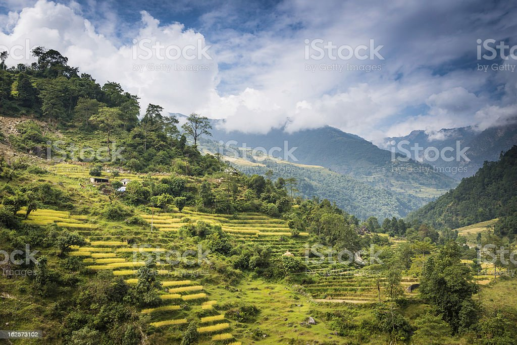 Vibrant green valley terraces under dramatic mountain skies Himalayas stock photo
