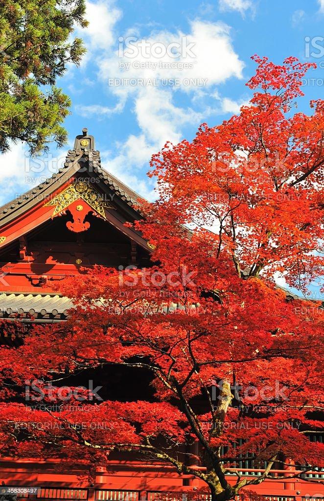 Vibrant Japanese maple tree and temple, Toshogu Shrine,Nikko,Japan royalty-free stock photo