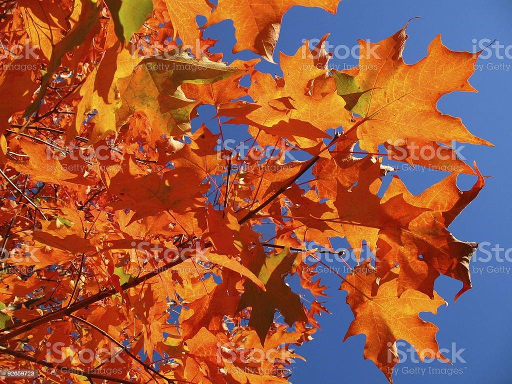 Vibrant Leaves stock photo