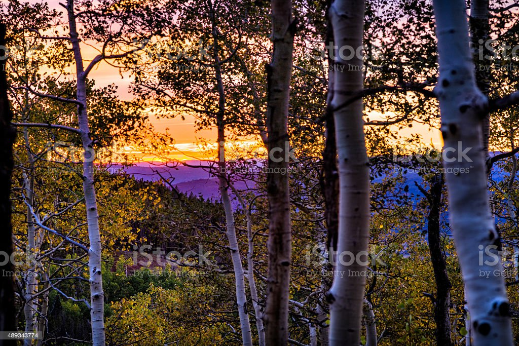 Vibrant Mountain Sunset Through Aspen Trees stock photo