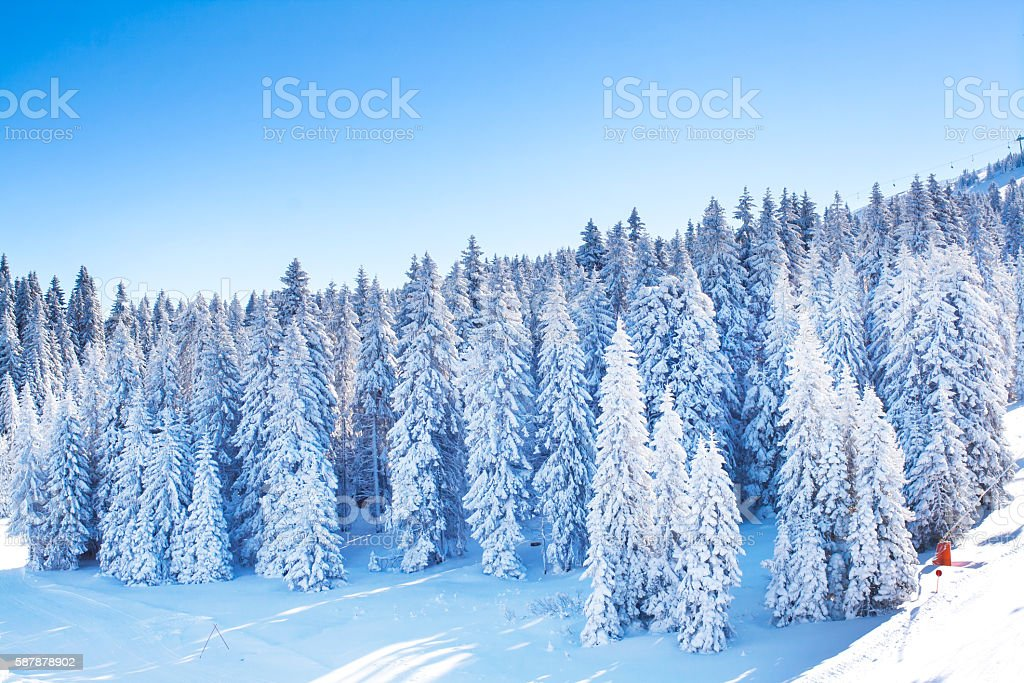 Vibrant panorama of the slopes at ski resort, snow trees stock photo