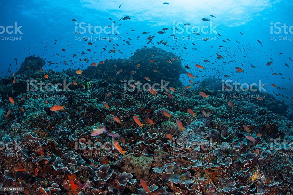 Vibrant Reef Fish and Reef stock photo