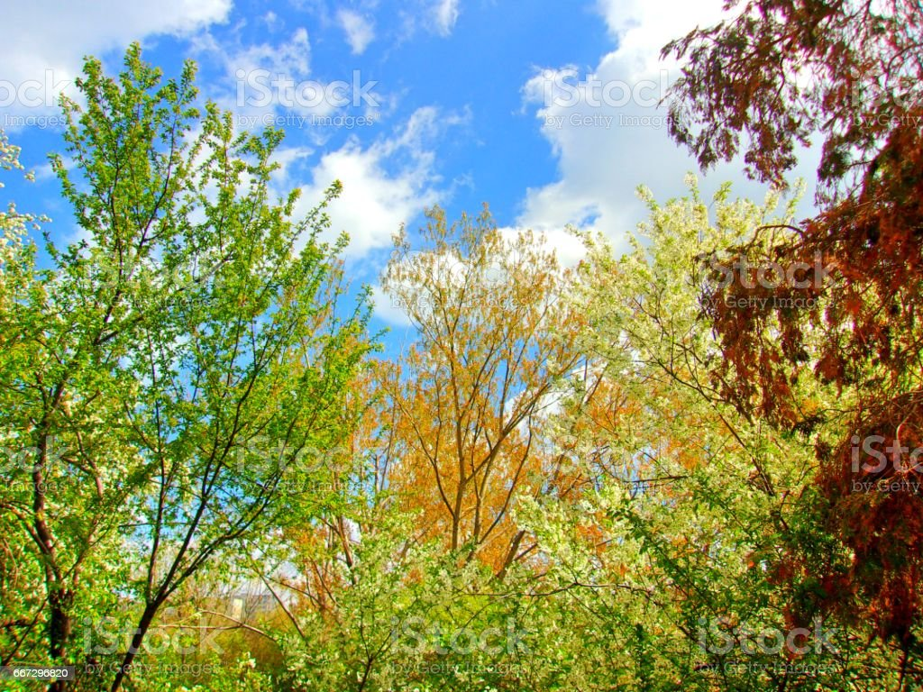 997- Vibrant spring nature backgrond, abstract stock photo