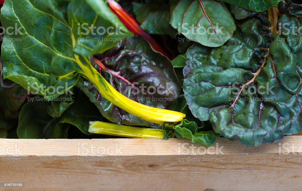 Vibrant Swiss Chard in Wood Crate (Close-Up) stock photo
