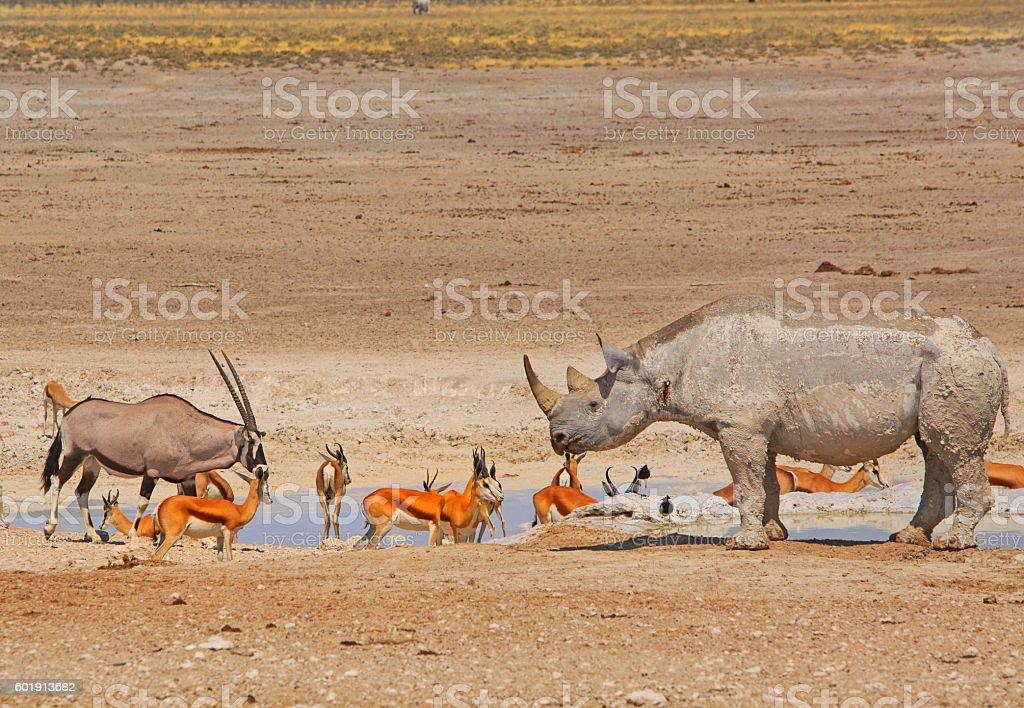 Vibrant waterhole in Etosha with Gemsbok oryx and black rhino stock photo