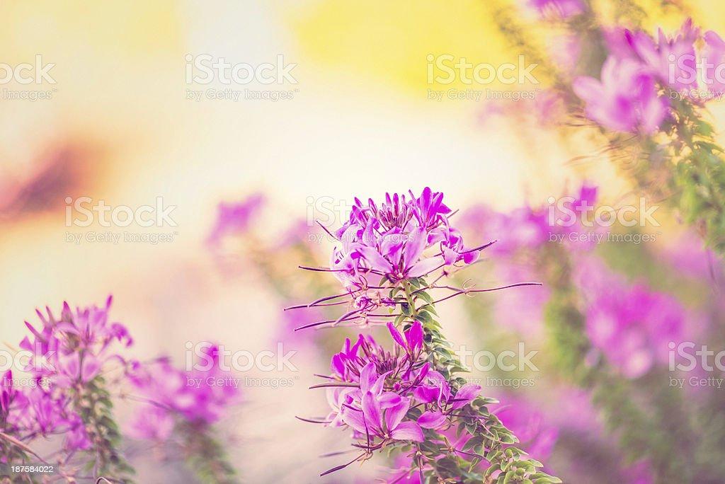 Vibrant Wild Flowers royalty-free stock photo