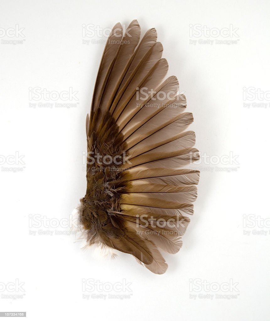 Vibrant Wing Detail royalty-free stock photo