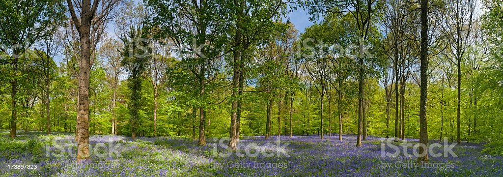 Vibrant woodland colorful natural forest royalty-free stock photo