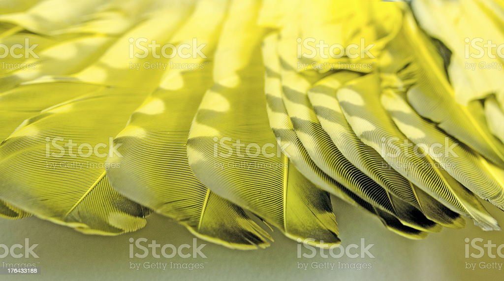vibrant yellow feathers of an wing royalty-free stock photo