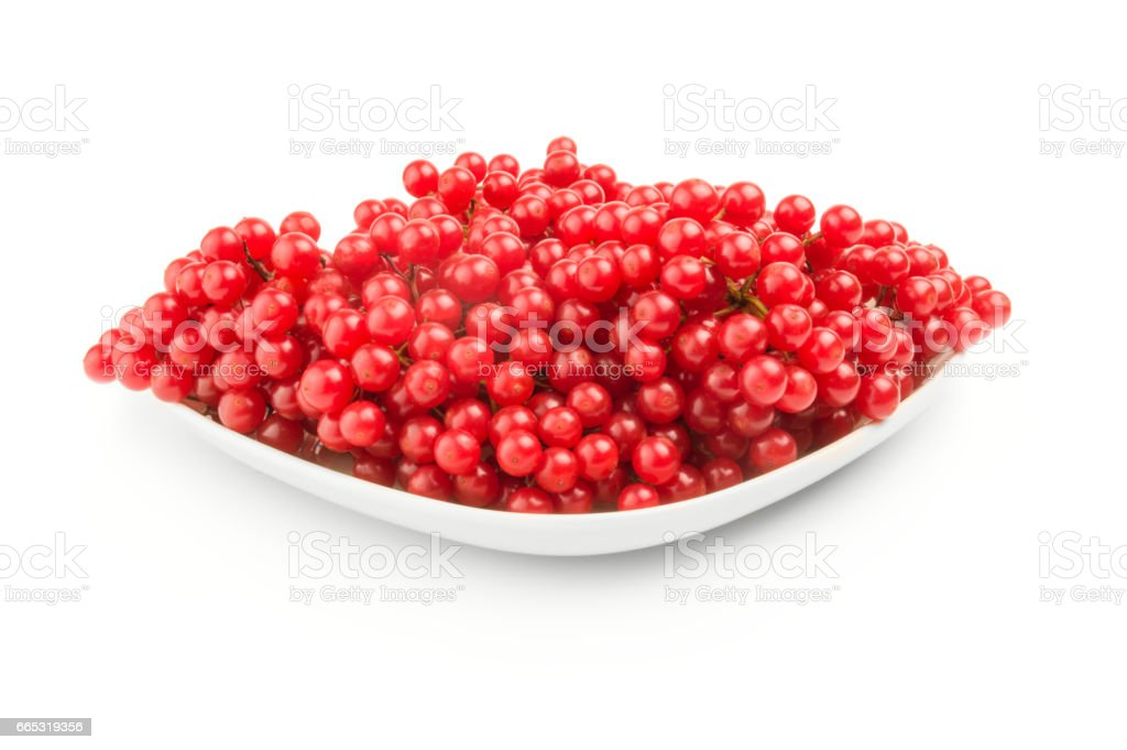 Viburnum berries over a white background stock photo