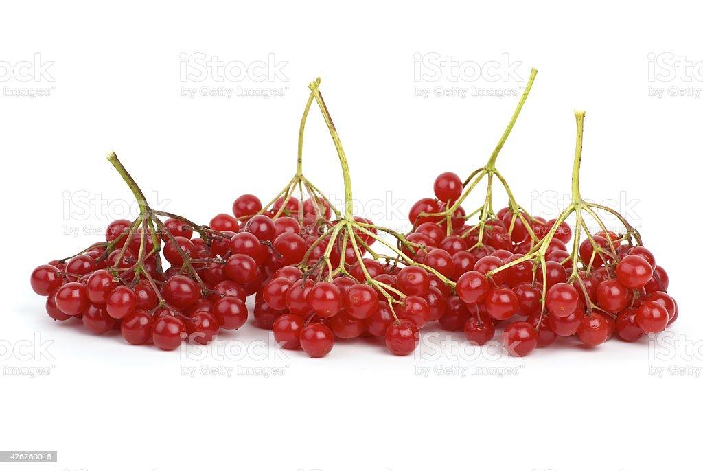 Viburnum bagas foto de stock royalty-free