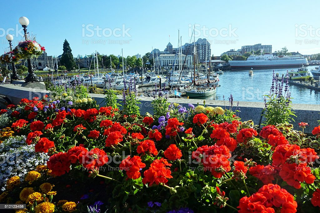 Victoria harbour stock photo