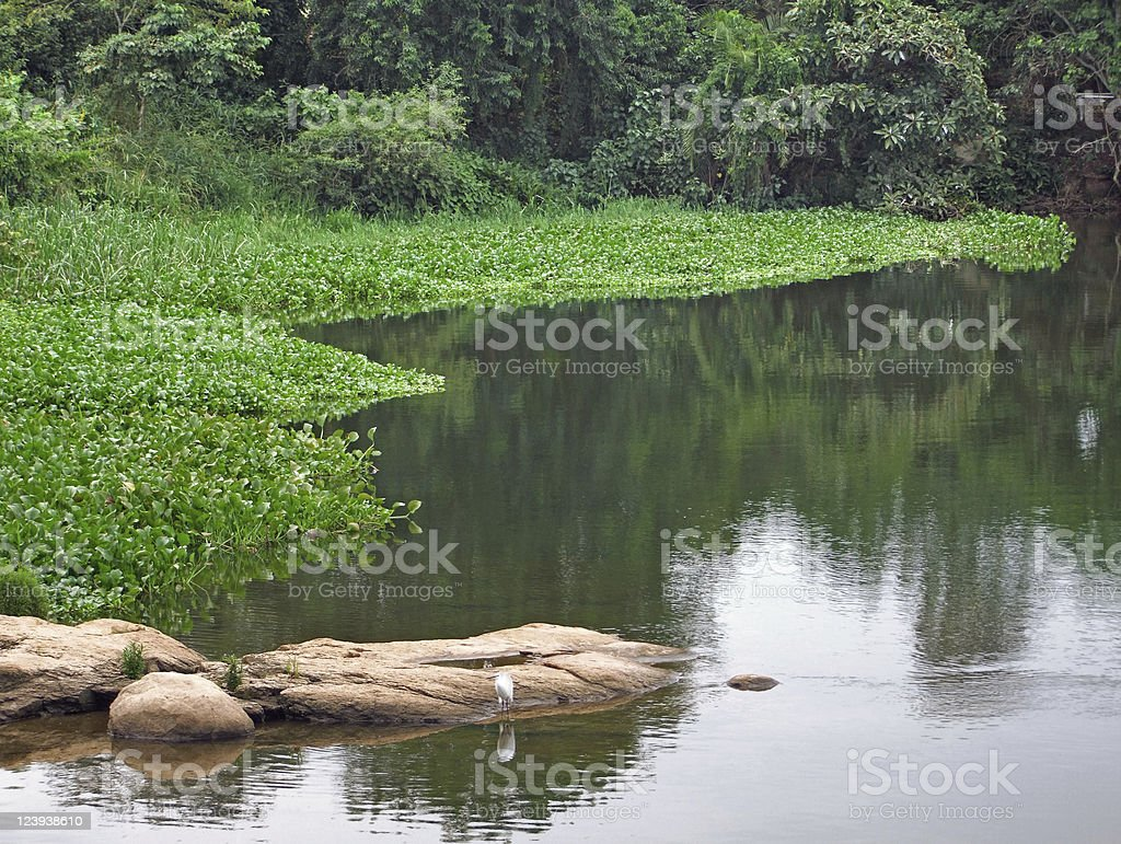 Victoria Nile waterside scenery royalty-free stock photo
