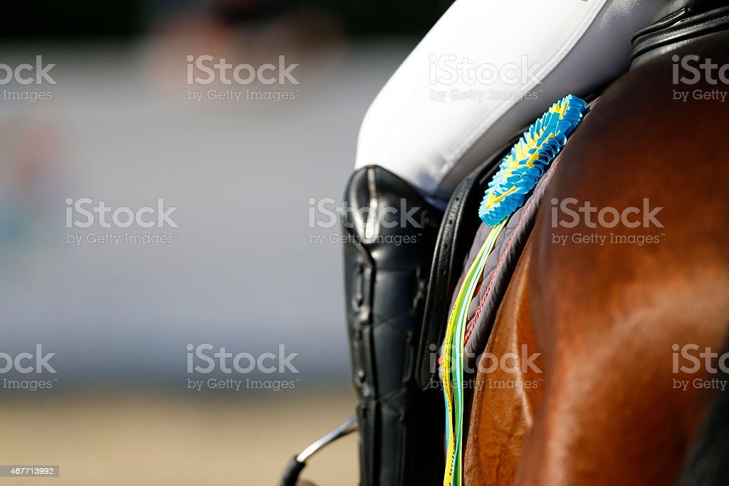 Victorious horse, a detailed rear look with the rider's leg stock photo