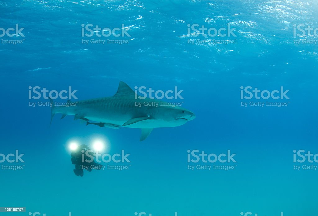 Videographer with Tiger Shark royalty-free stock photo