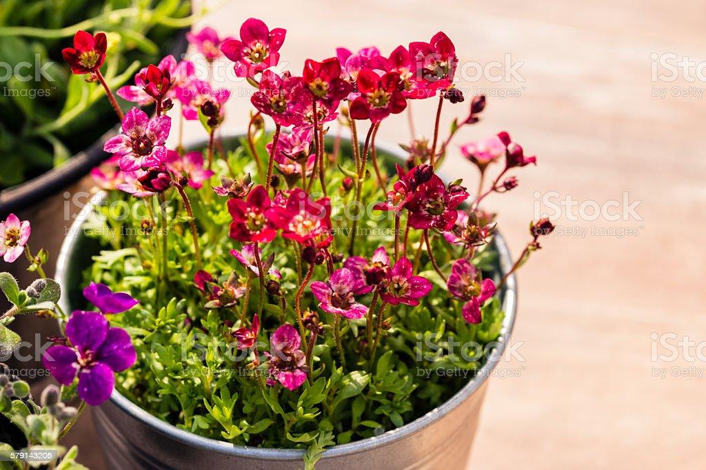 Viele Blumentöpfe stehen auf dem Gartentisch stock photo
